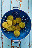 Sweet chestnuts in a blue colander