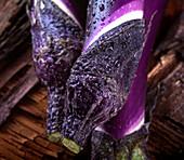 Violette Auberginen mit Wassertropfen