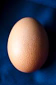 Fresh egg on a blue background