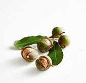 Macadamia nuts with peel and leaves against a white background