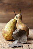 Three organic Conference pears with leaves
