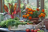 Tablett mit frisch geerntetem Gemüse