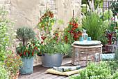 Terrasse  mit Naschgemüse und Kräutern