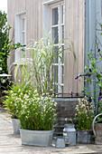 Gräser Arrangement auf der Terrasse