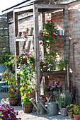 Terrasse mit Pflanzen im selbstgebauten Regal