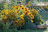 Gelbes Spätsommerbeet  mit Sonnenhut