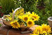 Korb mit frisch gepflückten Helianthus annuus ( Sonnenblumen )