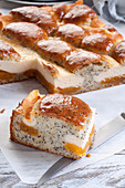 Cake with poppy seeds cheese and apricot