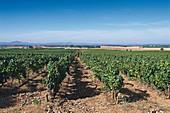 Quinta Dona Maria winery, Alentejo, Portugal