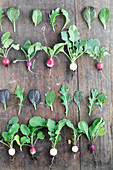 Various radishes with leaves