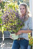 Ocimum kilimandscharicum x basilicum purpurascens 'African Blue'