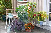 Gemüse Arrangement auf der Terrasse