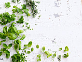 Various fresh kitchen herbs on a white wooden background (top view)