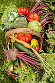 A basket of fresh vegetables in a garden