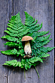 Pine bolete on a fern leaf