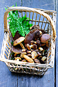 Basket of forest mushrooms bay bolete