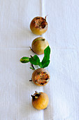Four medlars with leaves