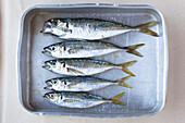 Fresh sardines on a baking tin