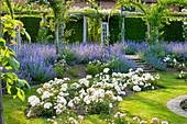 weiße Rosen und blaue Katzenminze, Bögen mit Ramblerrosen