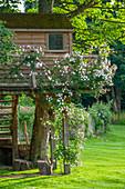 Baumhaus mit blühender Ramblerrose