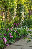 Beet mit Tulpen (Tulipa) und Waldrebe (Clematis) an Rosenbogen