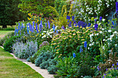 Blau-gelbes Beet mit Brandkraut (Phlomis russeliana) und Rittersporn (Delphinium)