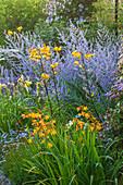 Beet mit Lilien (Lilium), Taglilien (Hemerocallis), Montbretien (Crocosmia) und Perovskie (Perovskia)