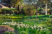 Formaler Garten mit Narzissen (Narcissus) und Schachblumen, Schachbrettblumen (Fritillaria meleagris) am Rasen-Weg