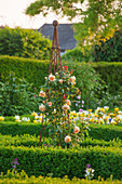 Englische Rose 'Crown Princess Margareta' (Rosa) von David Austin an Rank-Obelisk im Buchs Rondell