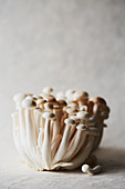White Beech Mushrooms