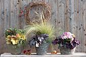 Herbst-Arrangement mit Blattschmuck-Pflanzen