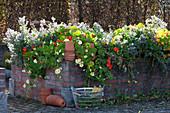 Gemauertes Hochbeet mit essbaren Blüten