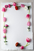 Frame made from tulips and ranunculus