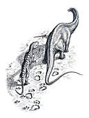 Theropod dinosaur tracking a sauropod dinosaur, illustration