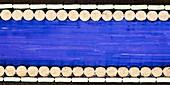 Cello string, light micrograph
