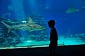 Aquarium shark tank