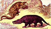 Cretaceous animals, 19th Century illustration