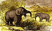 Prehistoric elephants, 19th Century illustration