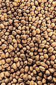Common walnuts