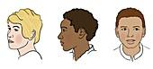 Different skin pigmentation, illustration