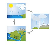 Water cycle, illustration