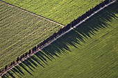 Tree shadows in fields, aerial photograph