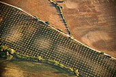 Olive orchard, Spain, aerial photograph