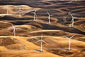 Wind turbines, California, USA, aerial photograph