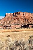 The Palisade, Colorado, USA
