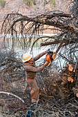 Removing invasive tamarisks from Dolores River, USA