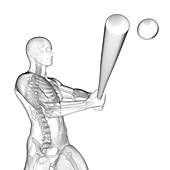 Person using baseball bat, skeletal structure, illustration