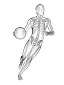 Person playing basketball, skeletal structure, illustration