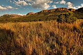 The Cradle of Humankind, South Africa