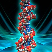 DNA molecular model, illustration